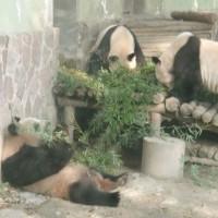 上海動物園