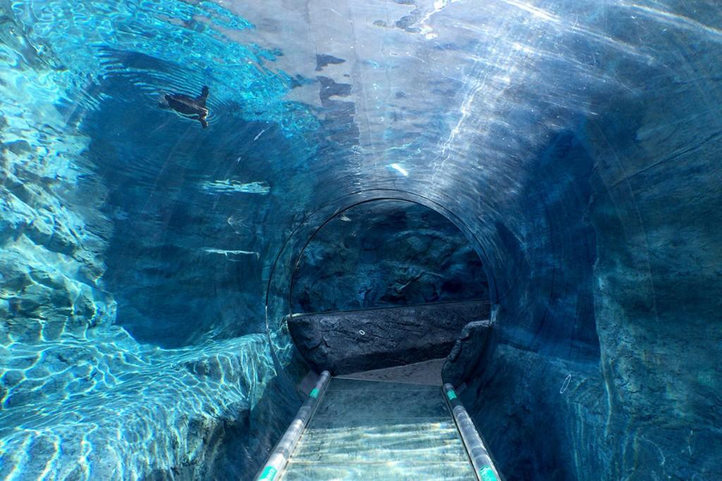 ぺんぎん館の水中トンネル
