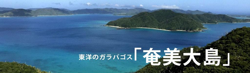 奄美大島タイトル