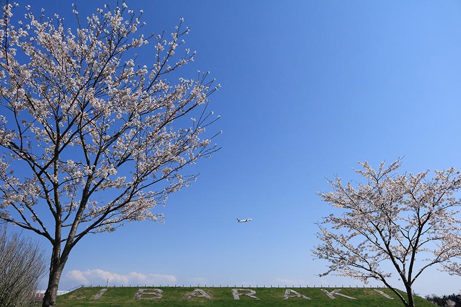空美ちゃん賞「IBRの春」鈴木 寛子 様